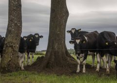 优质牛奶奖:庆祝爱尔兰乳品业的伟大成就金宝搏娱乐城