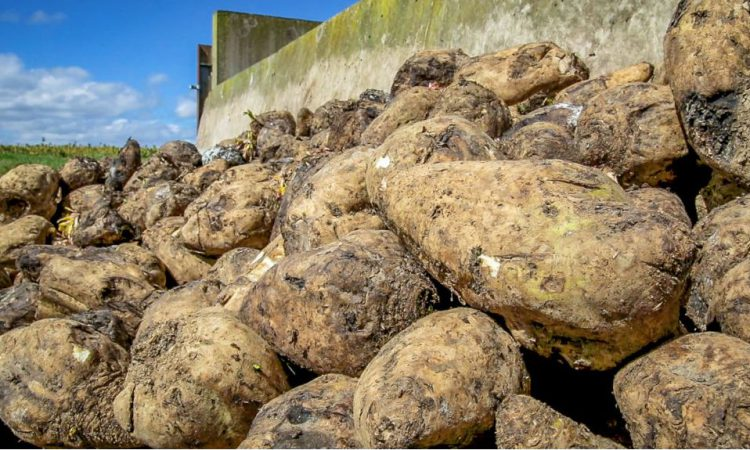 Beet Ireland 'postpones plans to revive the industry in Ireland'