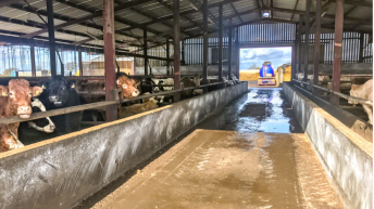 Government beef report set to propose feedlot review