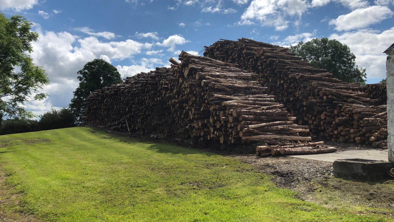 Oireachtas agri committee releases its report on forestry sector