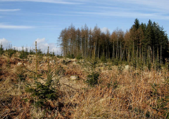 12-month forestry application delays 'unacceptable' – IFA
