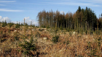 Almost €30 million in forestry payments to farmers this week