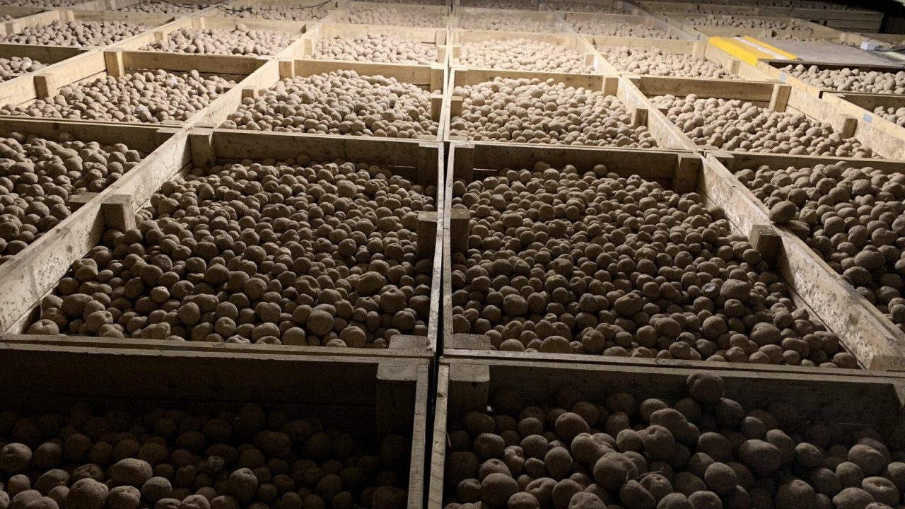 One potato product gone; replacement tested in Co. Meath