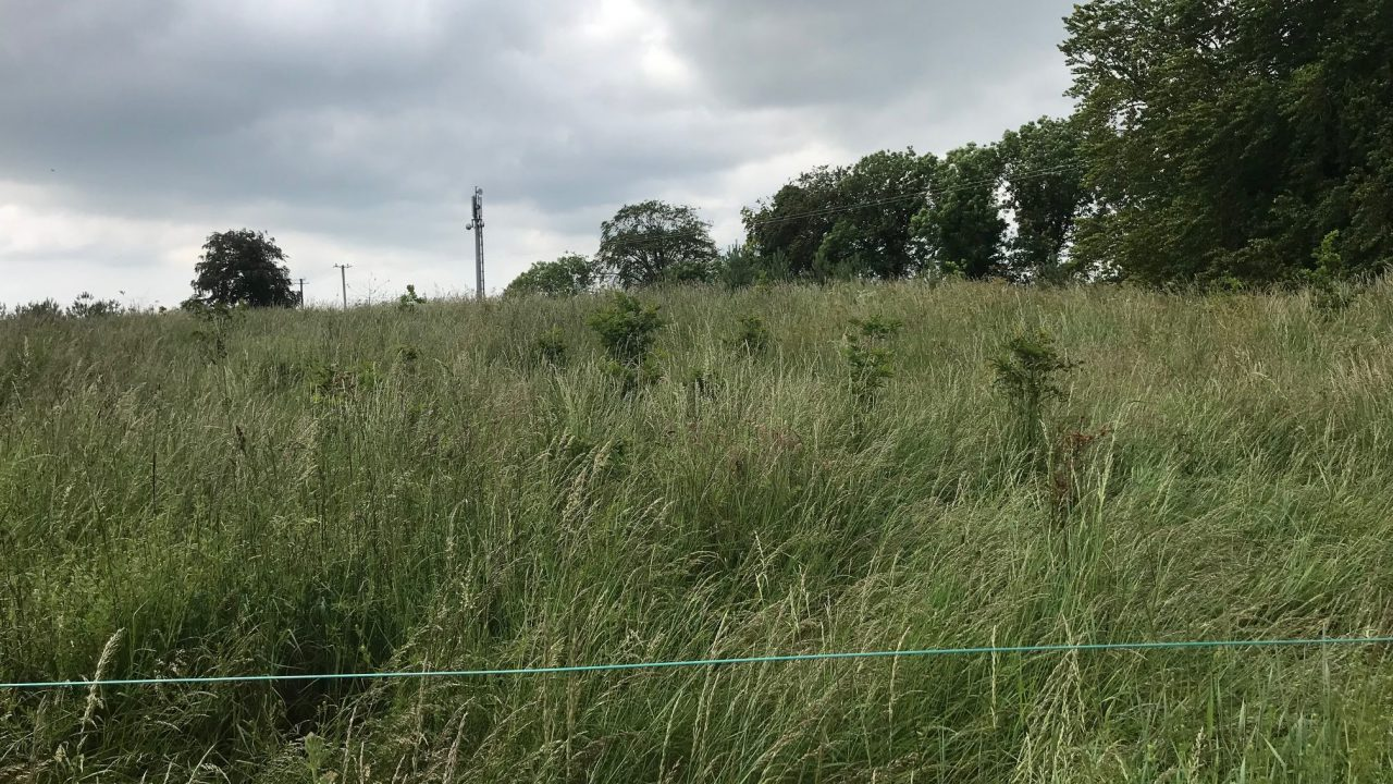 'Failed' forestry deemed 'satisfactory' by department