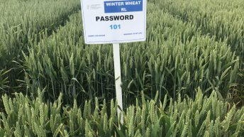 Cracking the 'Password' on wheat disease control with varieties