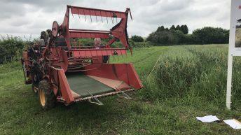 Growing heritage cereal varieties to help future growers