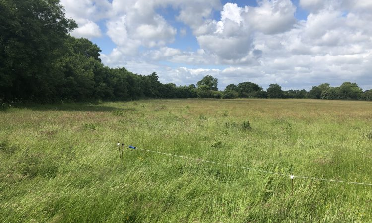 28ac Prosperous 'good quality land' for auction