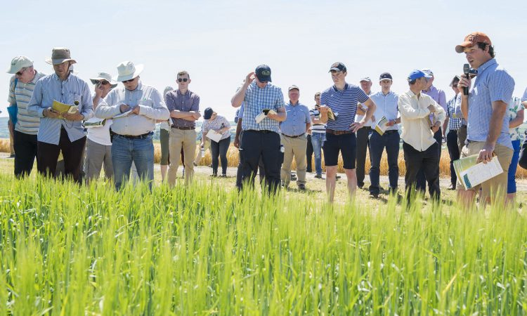 June…a month to see new advances in the tillage fields
