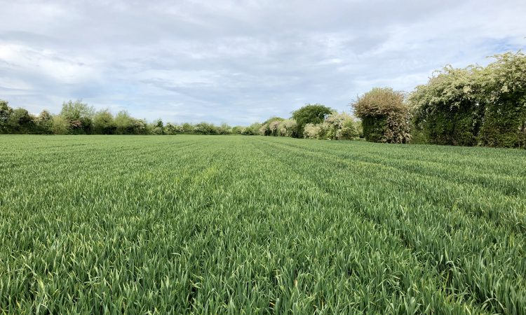 34ac for sale at Inchacooley, Monasterevin