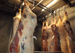 Gallery: Traditional Irish abattoir to go under the hammer in Co. Offaly