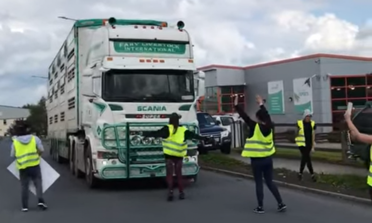 Video: Activists target factory-bound load of pigs in Tipperary