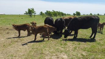 Beef focus: A feed bill of $10,000/month to deal with a 20-month drought in the US