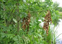 Department 'must introduce new properly funded' ash dieback scheme
