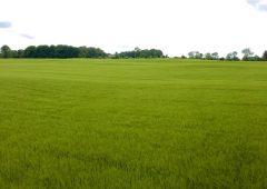 EU 'Farm to Fork' strategy now open to public feedback