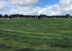 割草前围场是没有意义的练习吗?
