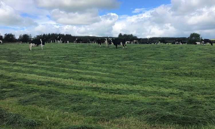 Is pre-mowing paddocks a pointless exercise?