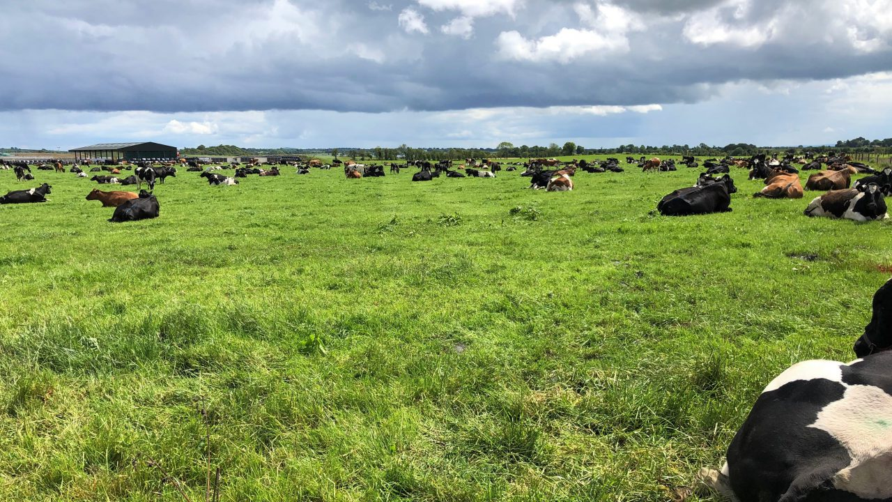Dairy focus: From beef farming in Scotland to dairy farming in Co. Westmeath
