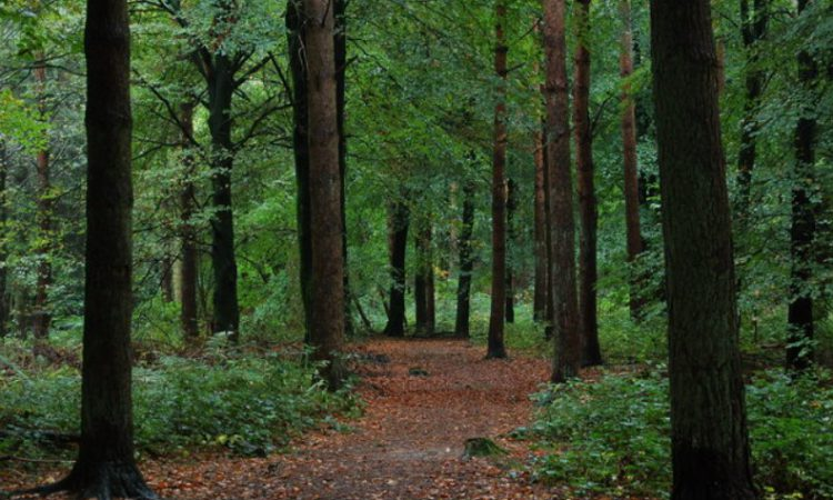 Forestry a 'key part of future climate planning' – Hackett