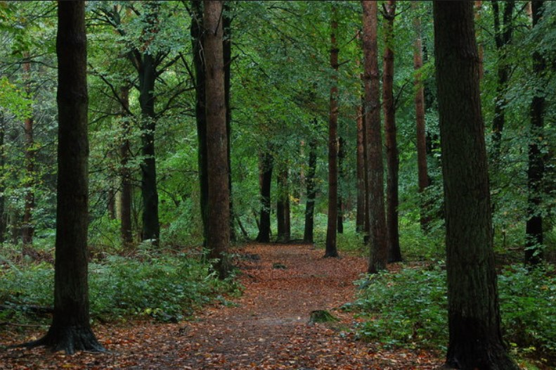 FSL awarded 'Dual Certification in Forest Management'