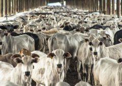"""欧盟农民被南方共同市场交易""""背后捅了一刀""""——牛肉计划运动"""