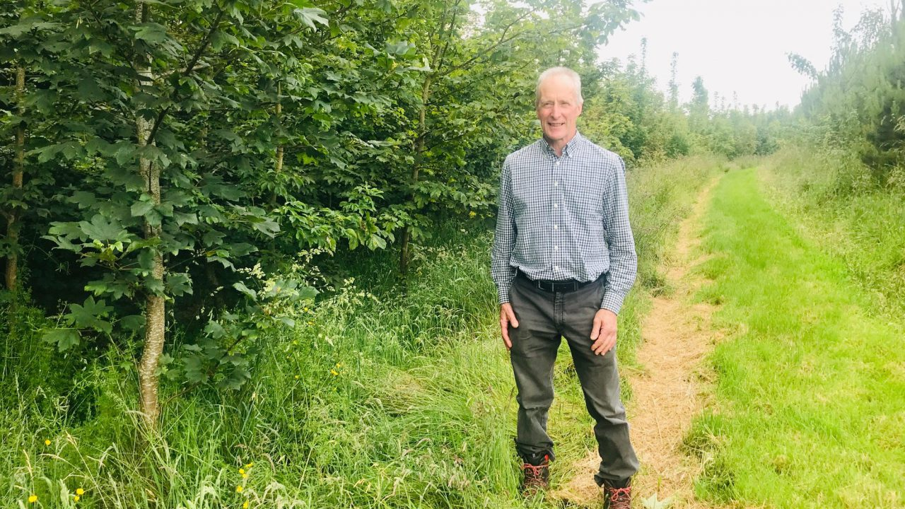 Cows to conifers: 'Food is not the priority – I'm farming for air'