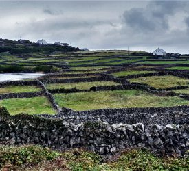 Climate Action Bill 'blatantly attacks fabric of rural Ireland'