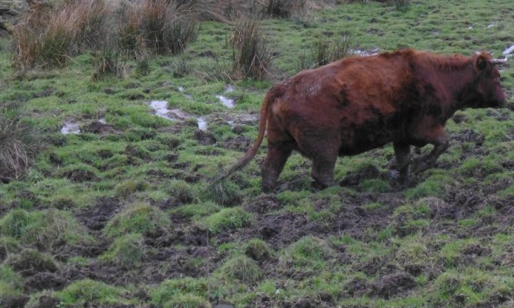 Graphic: Farmer sentenced for animal welfare offences