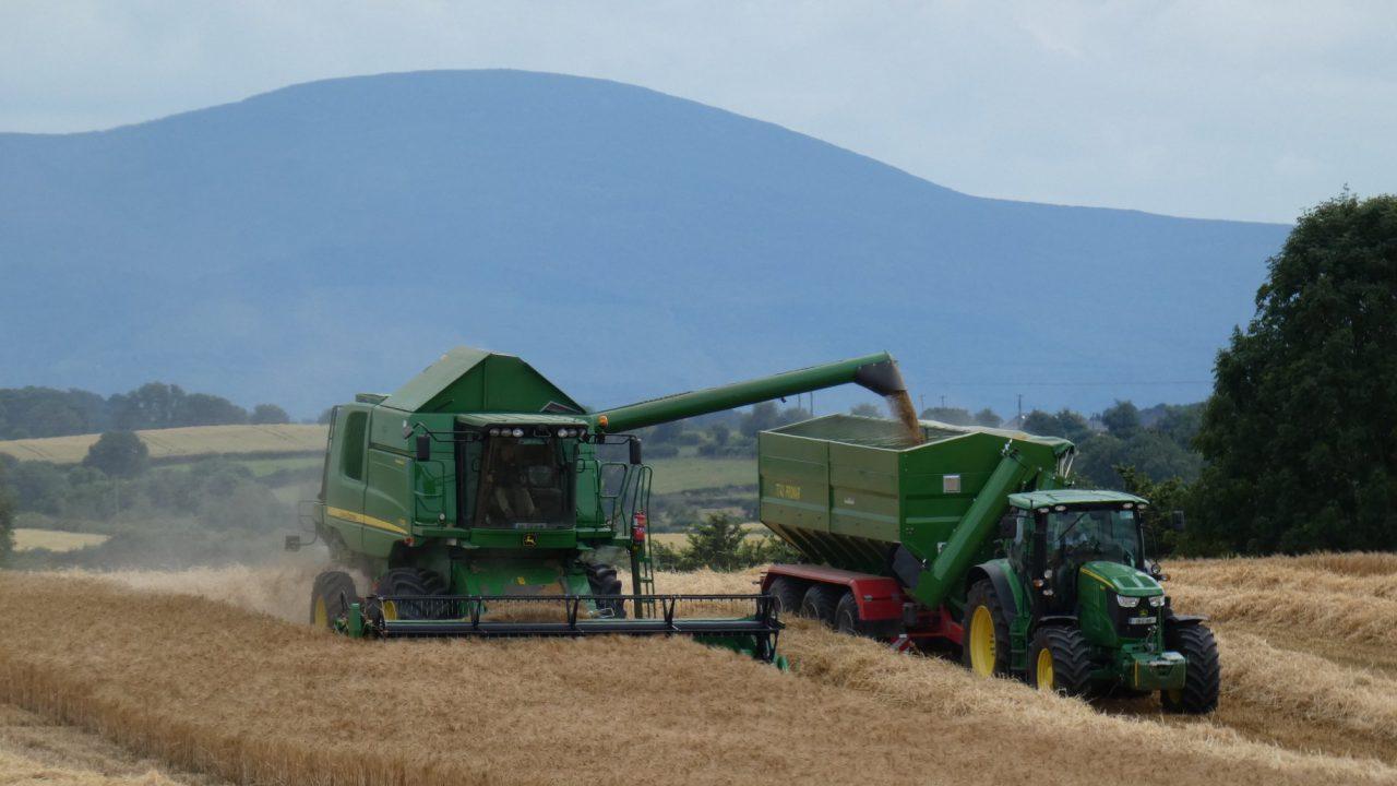 Grain price: EU harvest looking good; no enthusiasm in the market