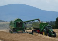 Grain price: EU harvest looking good; no enthusiasm in the market