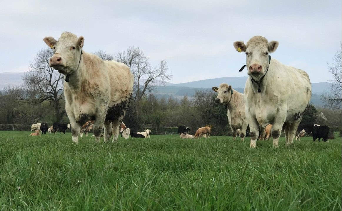 Video: Why this Co. Tipperary suckler farmer made the switch to Herdwatch
