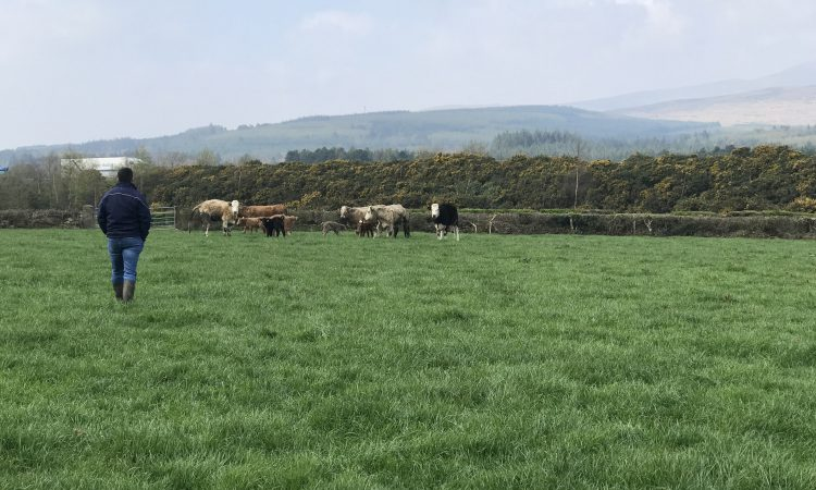 'Expecting farmers to take €3.45/kg at the factory gate is not sustainable'