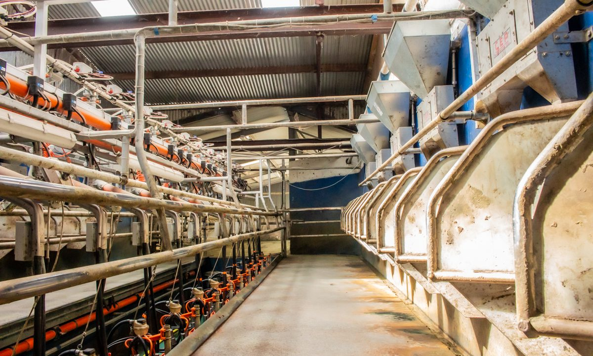 'Time to spell out problems in north's dairy industry' – NI farmers