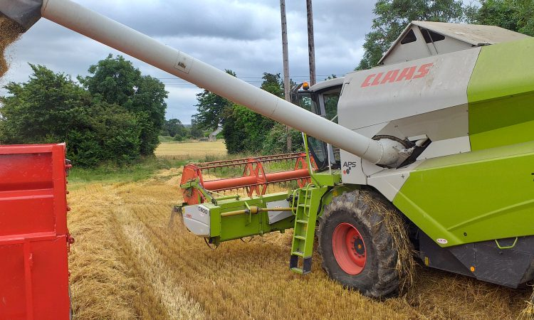 Rain halts harvest…plus straw news