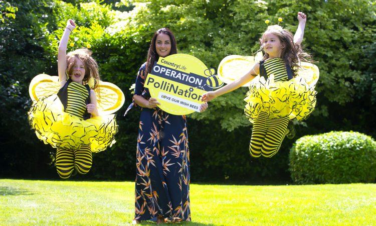 'Operation PolliNation' creates a real buzz