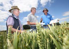 More varieties on show at Seedtech open day