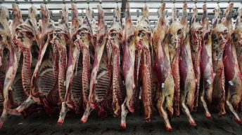 'Irrefutable' basis for beef price increase – McCormack