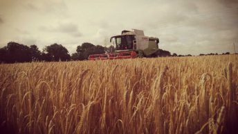 Harvest update: Mixed reports on yield as winter barley wraps up in midlands