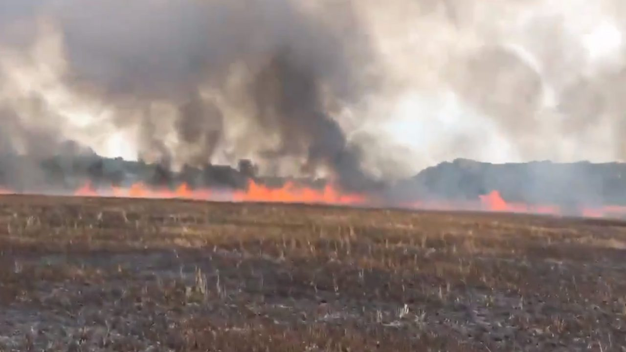 Minister condemns 'spate of wildfires in recent years' in Irish countryside