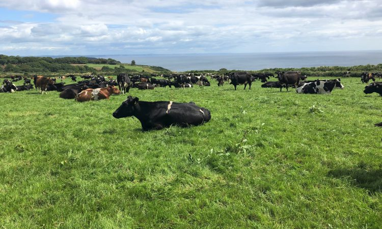 Dairy focus: Olympian turned dairy farmer in Co. Waterford