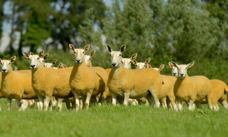 Auction: Jalex flock to go under the hammer