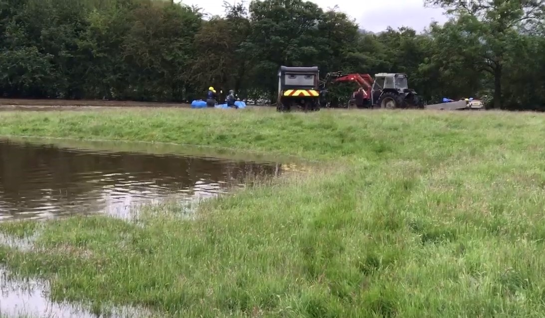RSPCA saves 12 stranded sheep in flood rescue mission