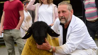 Retired car dealer making waves in the pedigree Suffolk sheep industry