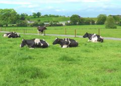 Video: The secret to becoming an NDC & Kerrygold Quality Milk Award winner