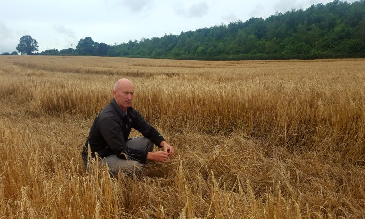 Rainfall leading to difficult harvest and high losses – Woods