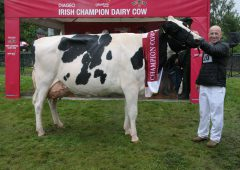 Diageo Baileys cow winner announced at Virginia Show