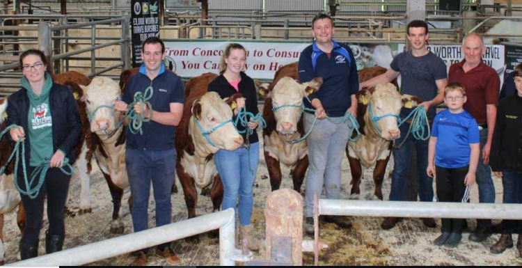 Irish Hereford Society holds cattle dressing and showing workshops