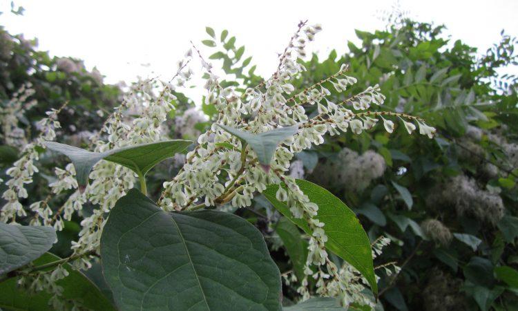 Invasive species: 'Biosecurity actions needed'