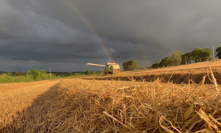 Grain price: No pot of gold at the end of the rainbow