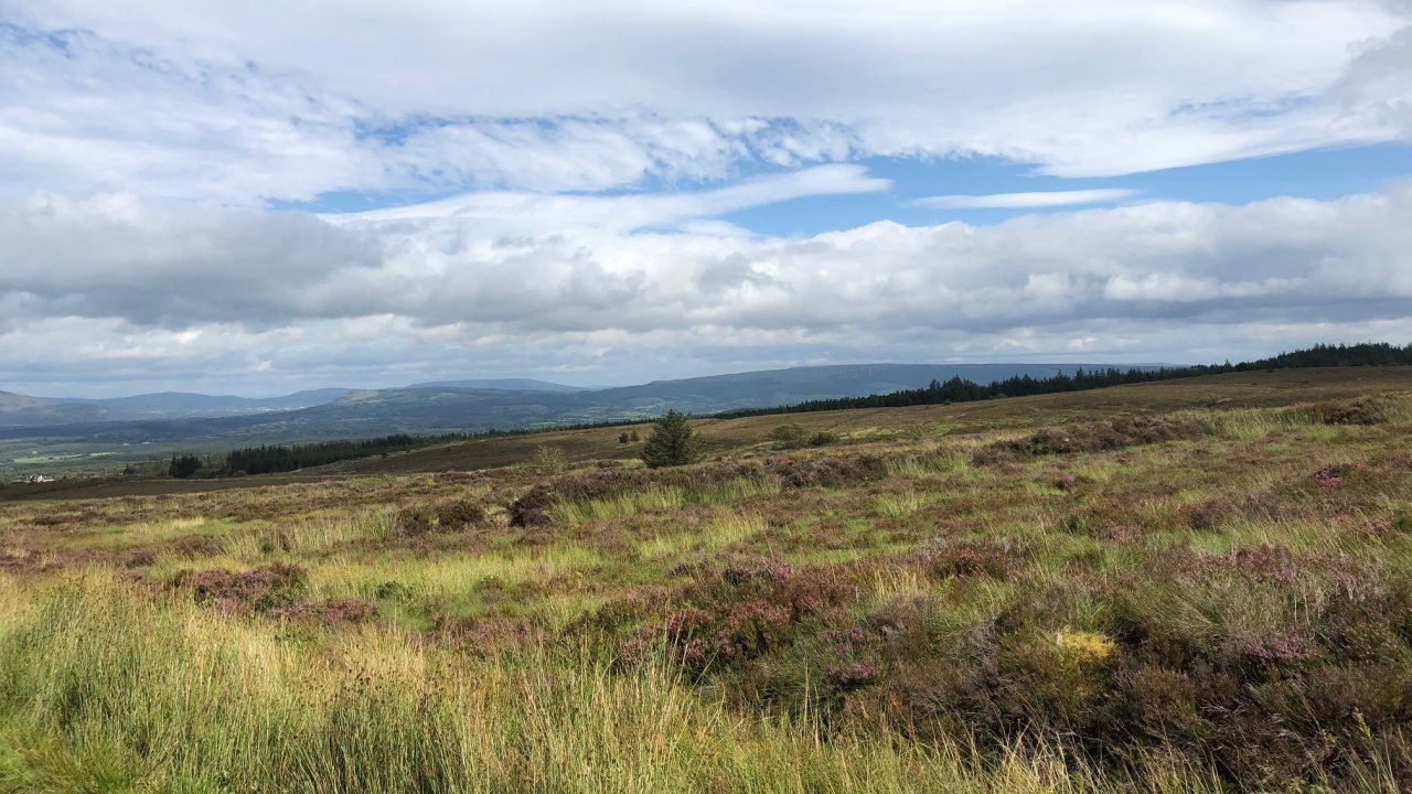 Coillte confirms intention to build 10-turbine wind farm in north-west