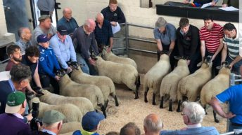 Tullow Sheep Breeders' Association set to hold 32nd annual show and sale